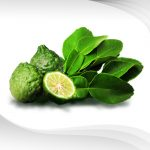 Thai Kaffir Lime (Leaves) Essential Oil