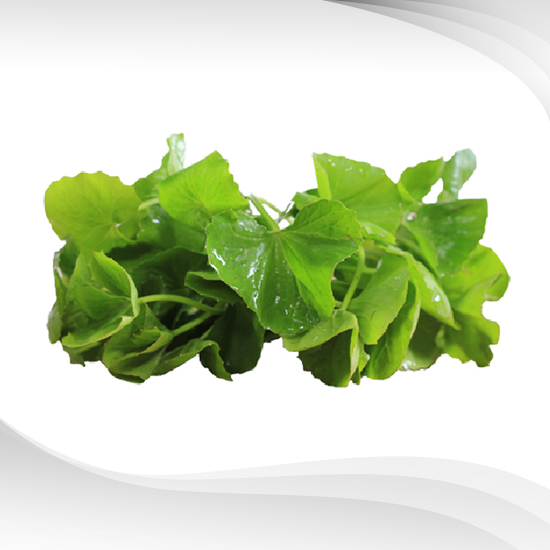 Centella Asiatica Extract Liquid
