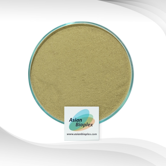 Spinach Extract - Spinach Powder