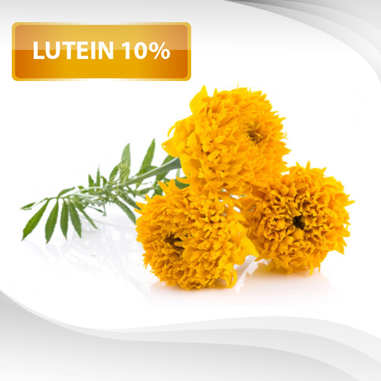 Marigold Extract Powder (Lutein 10%)